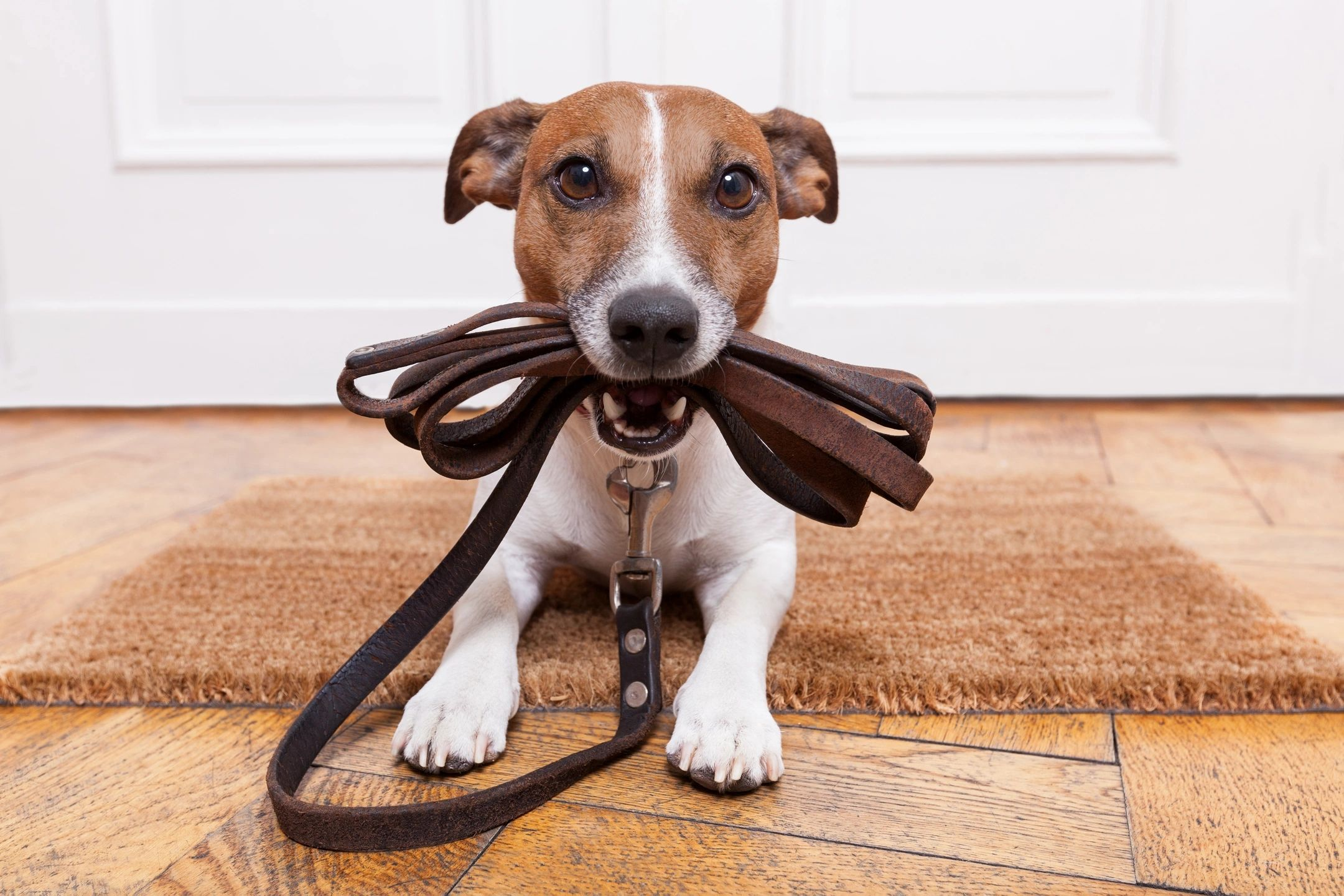 Doggies love their pet sitters loaded with happy walks and hugs.