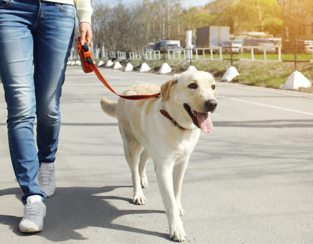 Dogs are happier when they go for a walk.